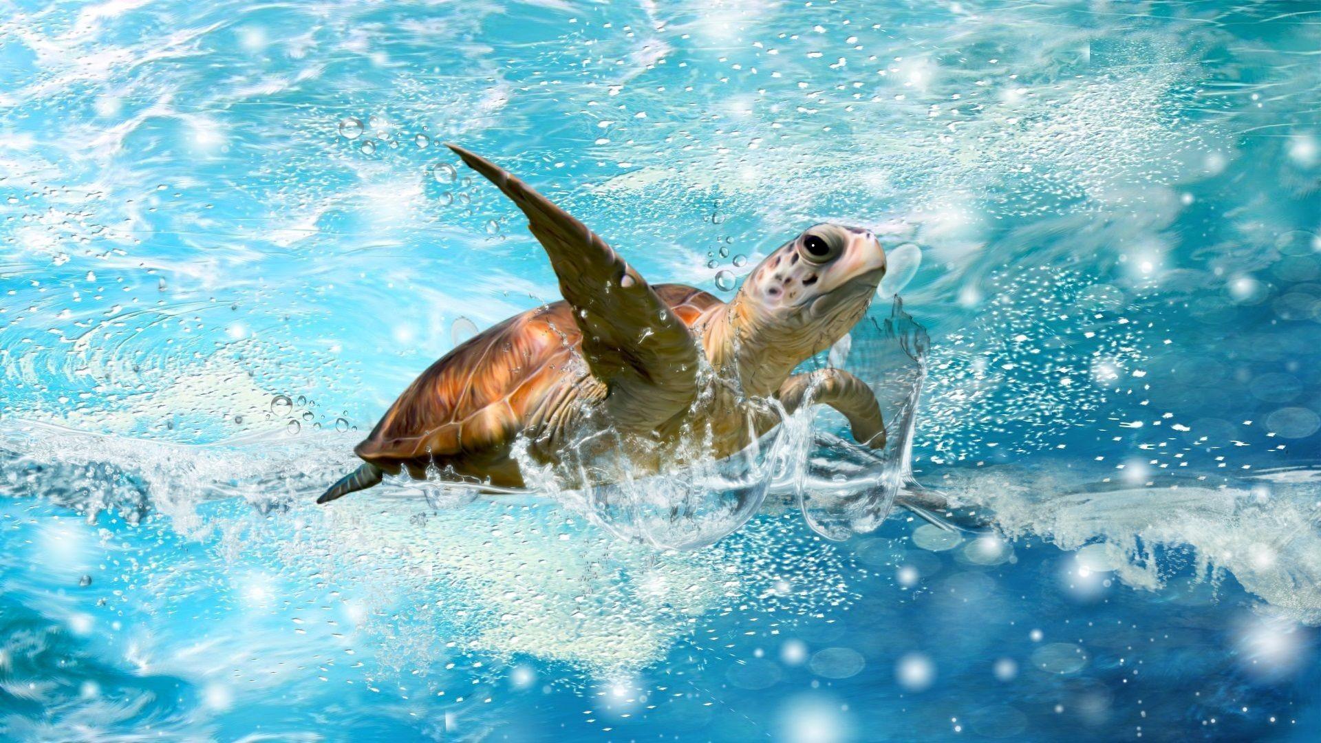 Ảnh con rùa bơi trên mặt nước đẹp