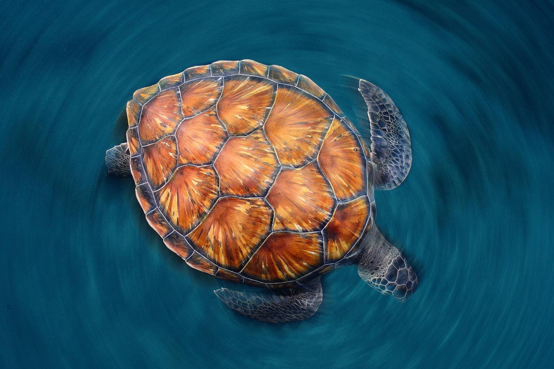 Ảnh con rùa có màu sắc độc, lạ