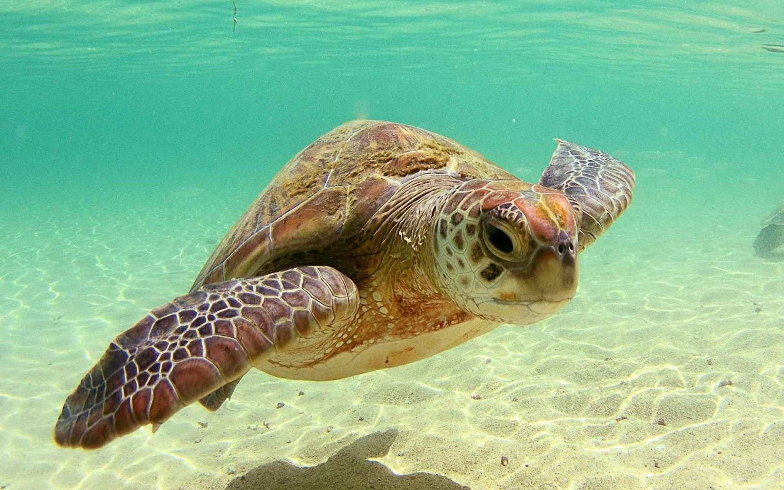 Ảnh đẹp loài rùa biển