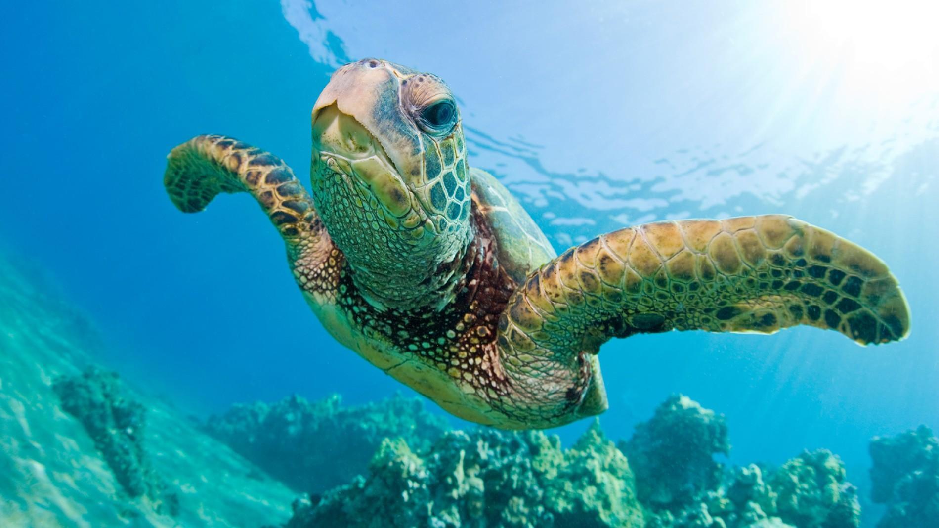 Ảnh đẹp nhất về loài rùa biển