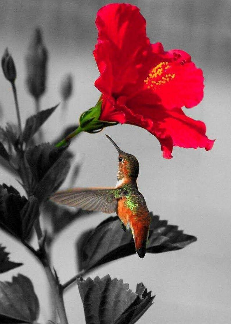 Ảnh hoa dâm bụt và chú chim nhỏ