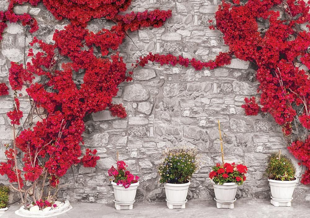 Ảnh hoa giấy leo tường đẹp nhất