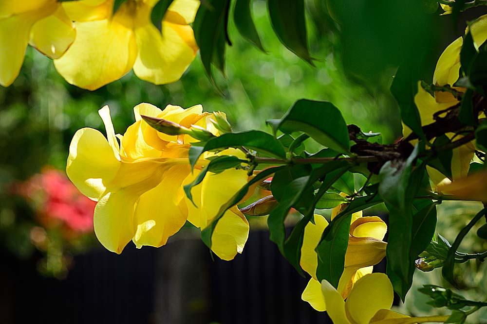 Ảnh hoa Quỳnh Anh cực đẹp