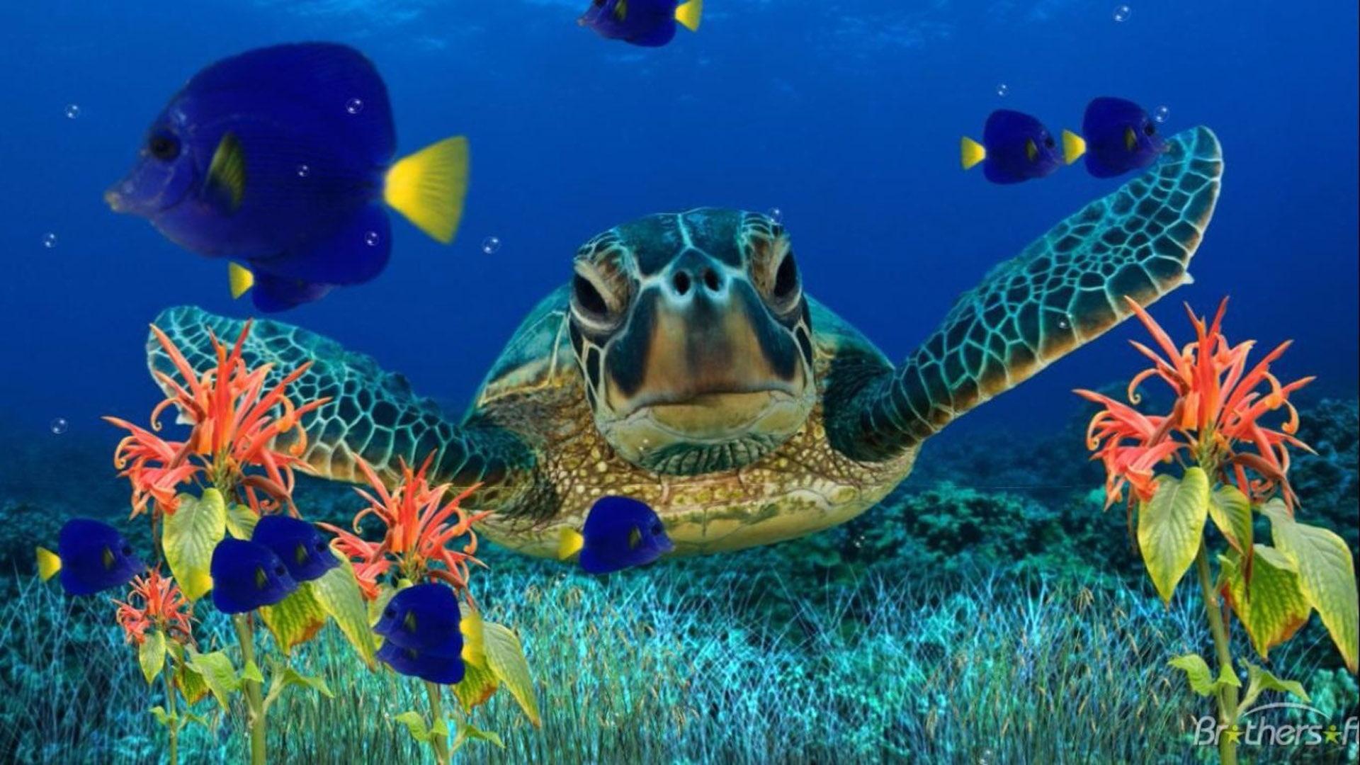 Ảnh rùa biển chụp gần