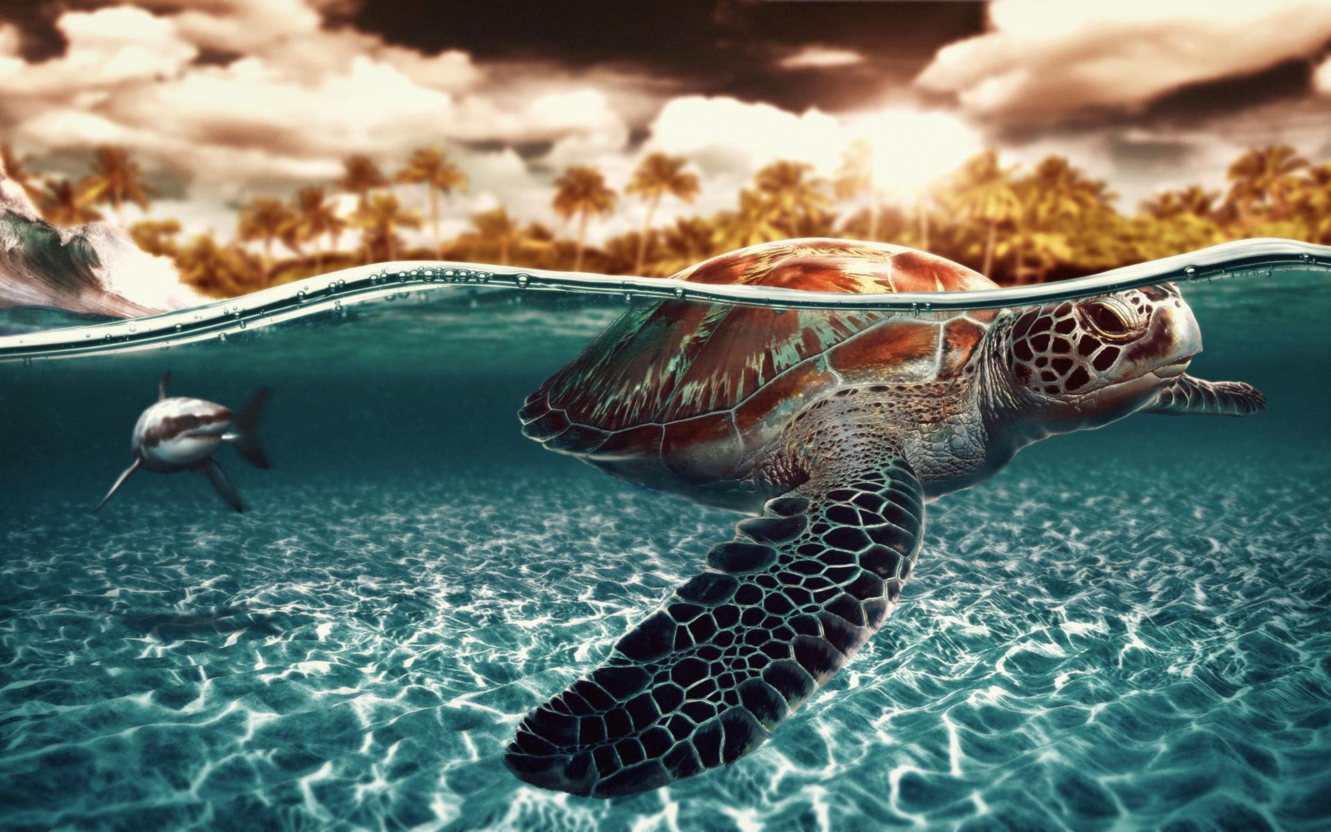 Ảnh rùa biển đẹp nhất