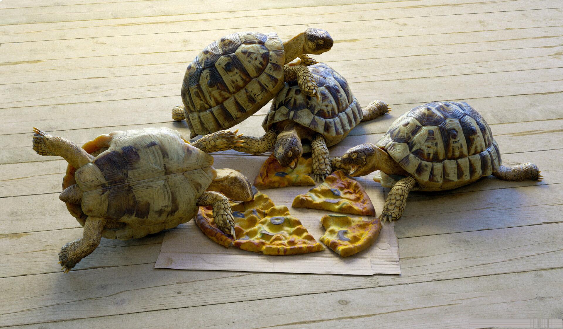 Ảnh rùa con đang ăn