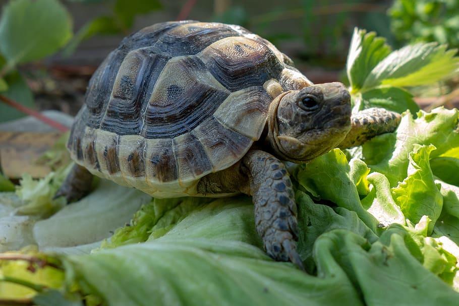Ảnh rùa con và rau xanh