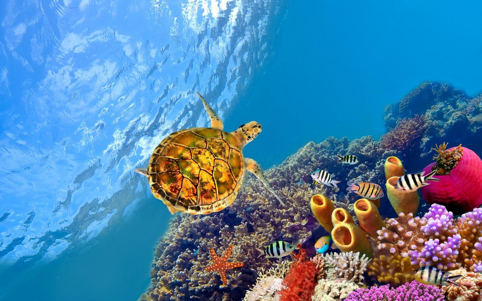 Ảnh rùa đang bơi đẹp nhất