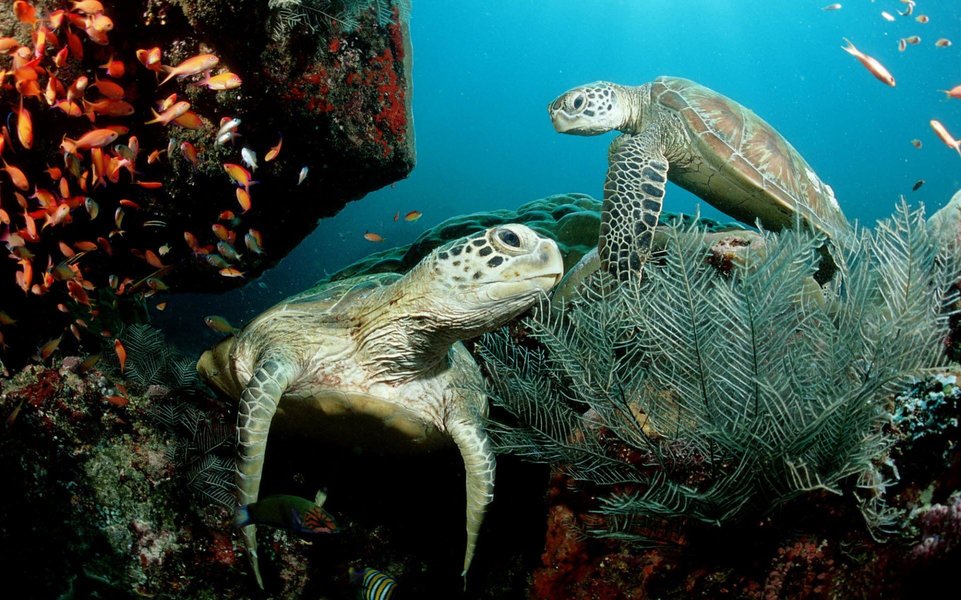 Ảnh rùa và biển xanh đẹp