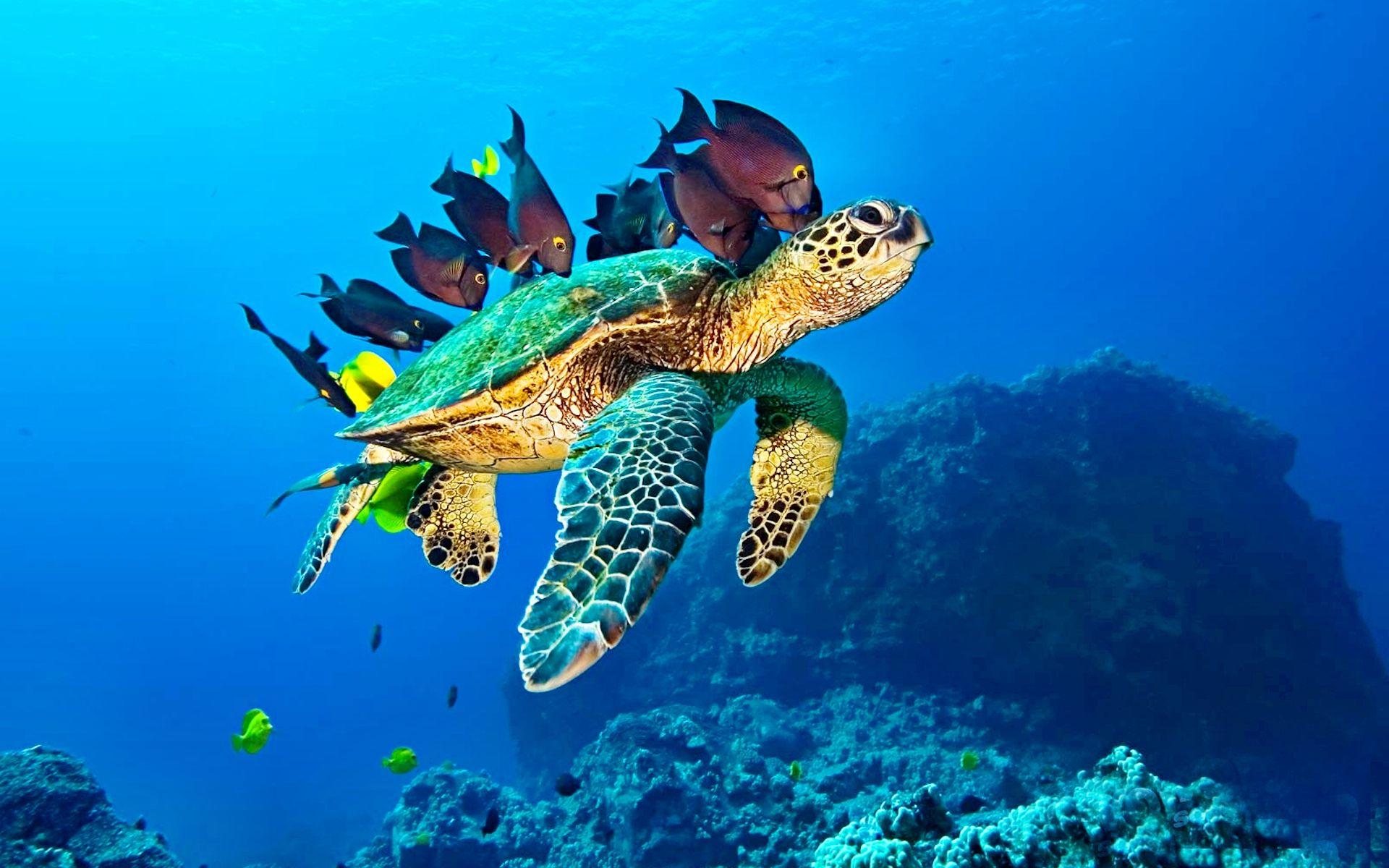 Ảnh rùa và cá dưới đại dương