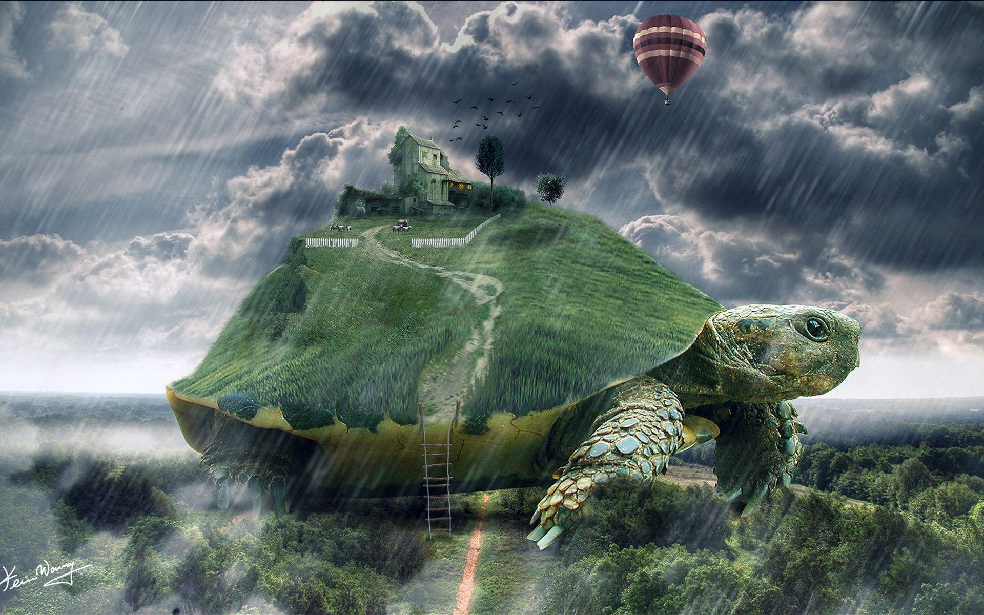 Ảnh vẽ con rùa đẹp nhất