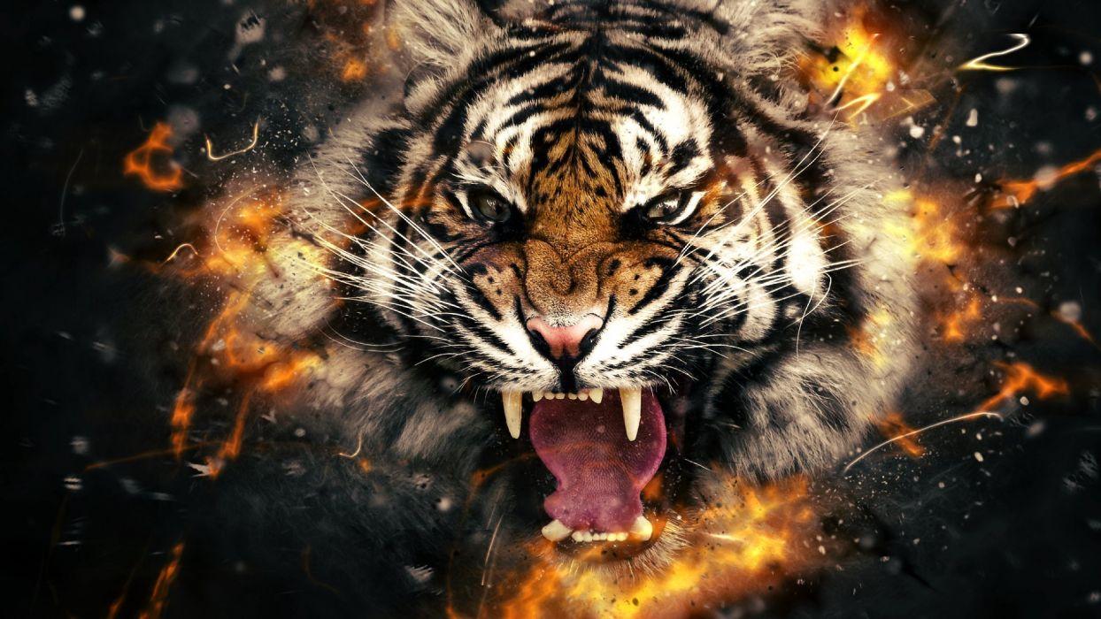 Hình ảnh con hổ đang giận dữ