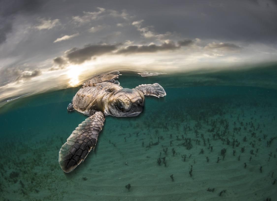 Hình ảnh con rùa cute
