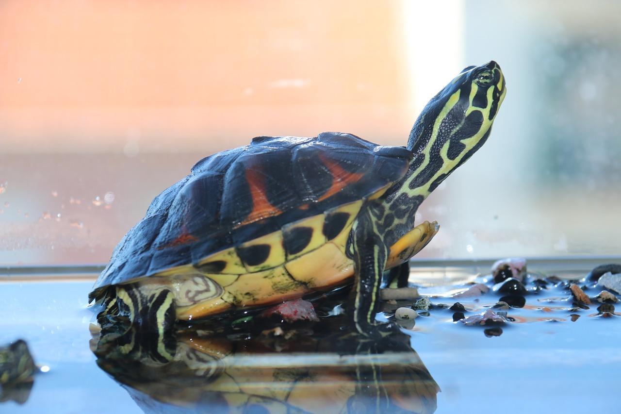 Hình ảnh con rùa dễ thương