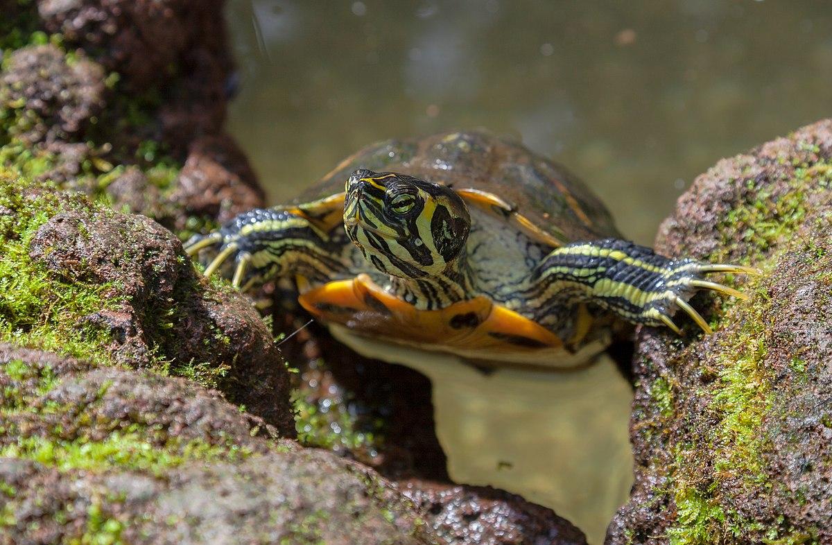 Hình ảnh con rùa đẹp, đáng yêu