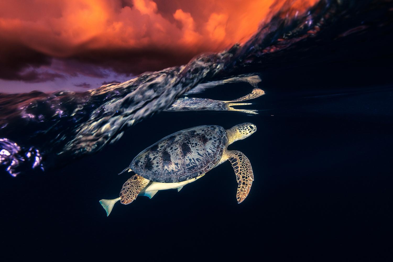 Hình ảnh con rùa đẹp, ngầu
