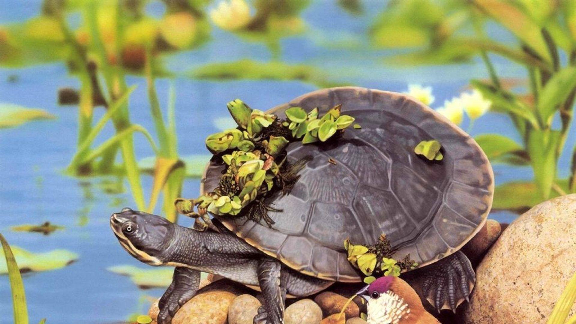 Hình ảnh con rùa đẹp nhất