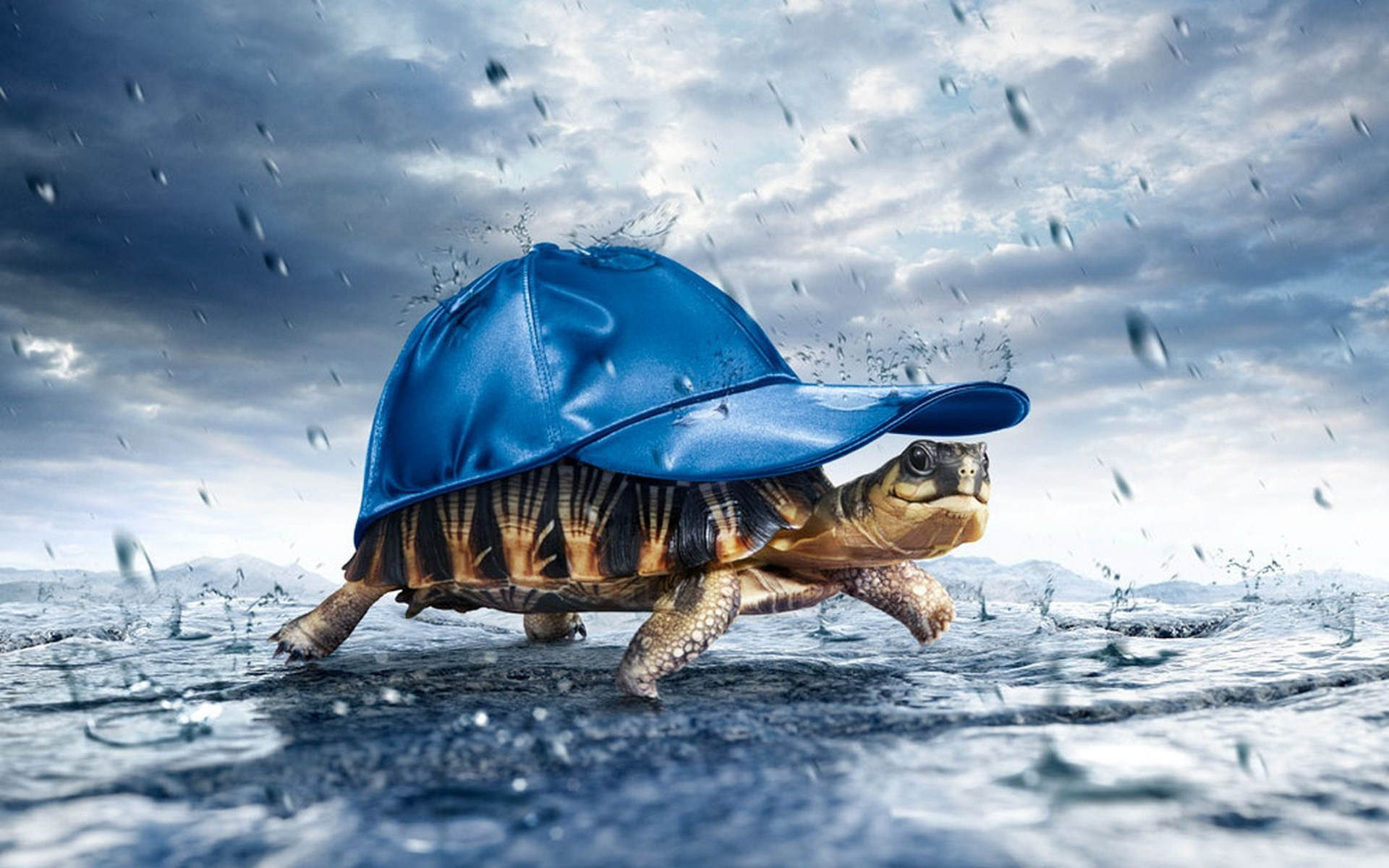 Hình ảnh con rùa ngộ nghĩnh, đáng yêu