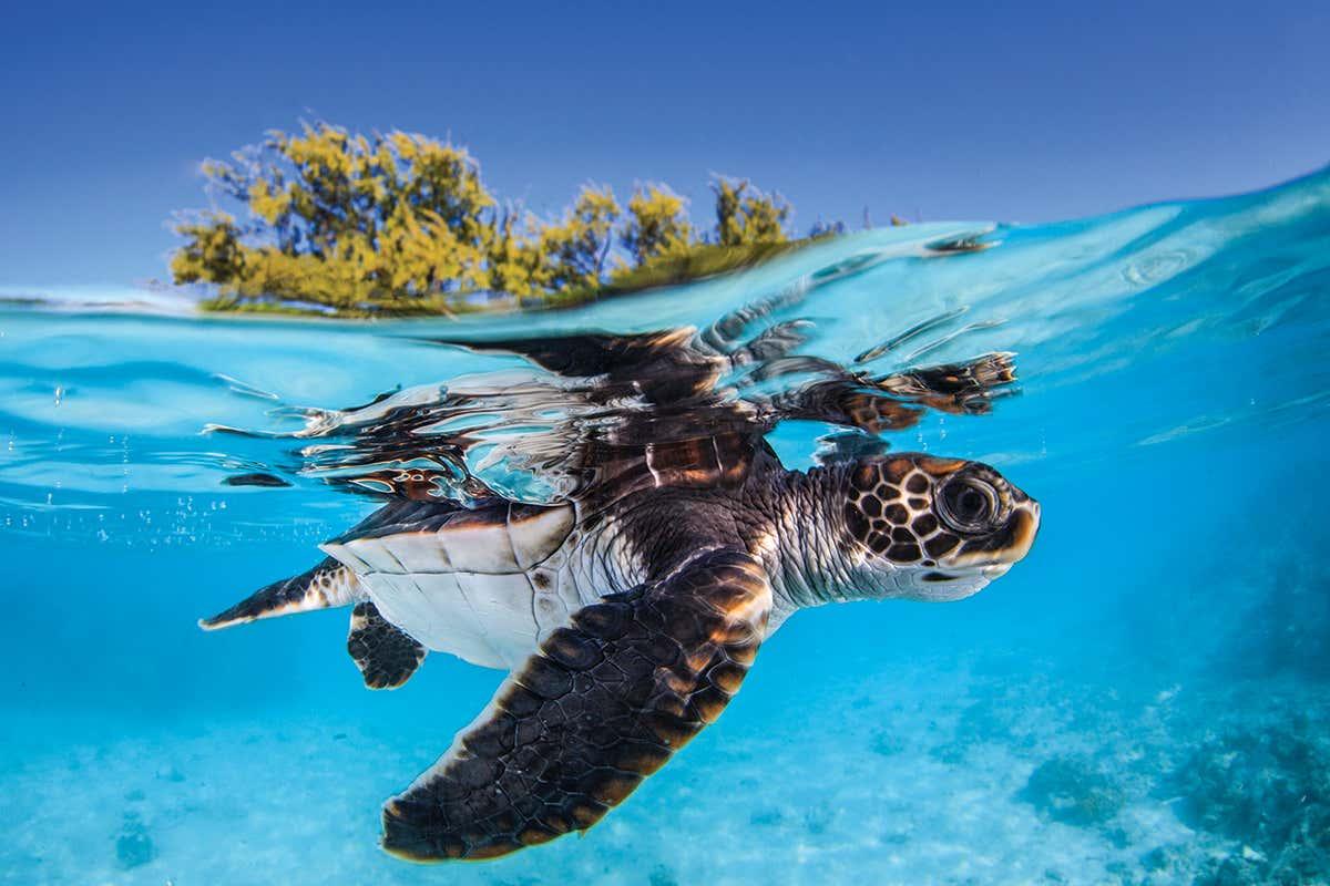 Hình ảnh con rùa và đại dương bao la