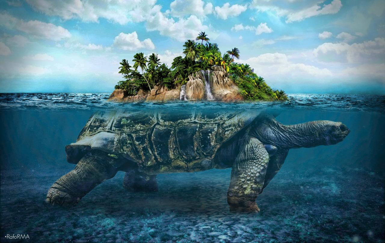 Hình ảnh con rùa với thiên nhiên