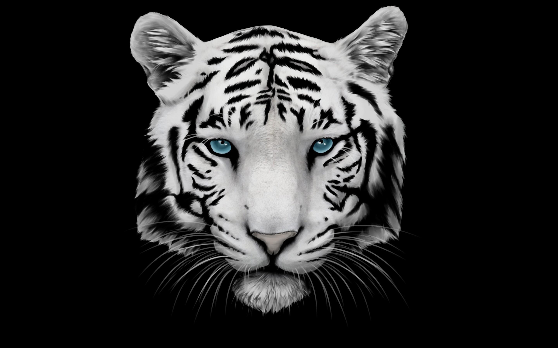 Hình ảnh đầu con hổ vằn trắng đen đẹp nhất