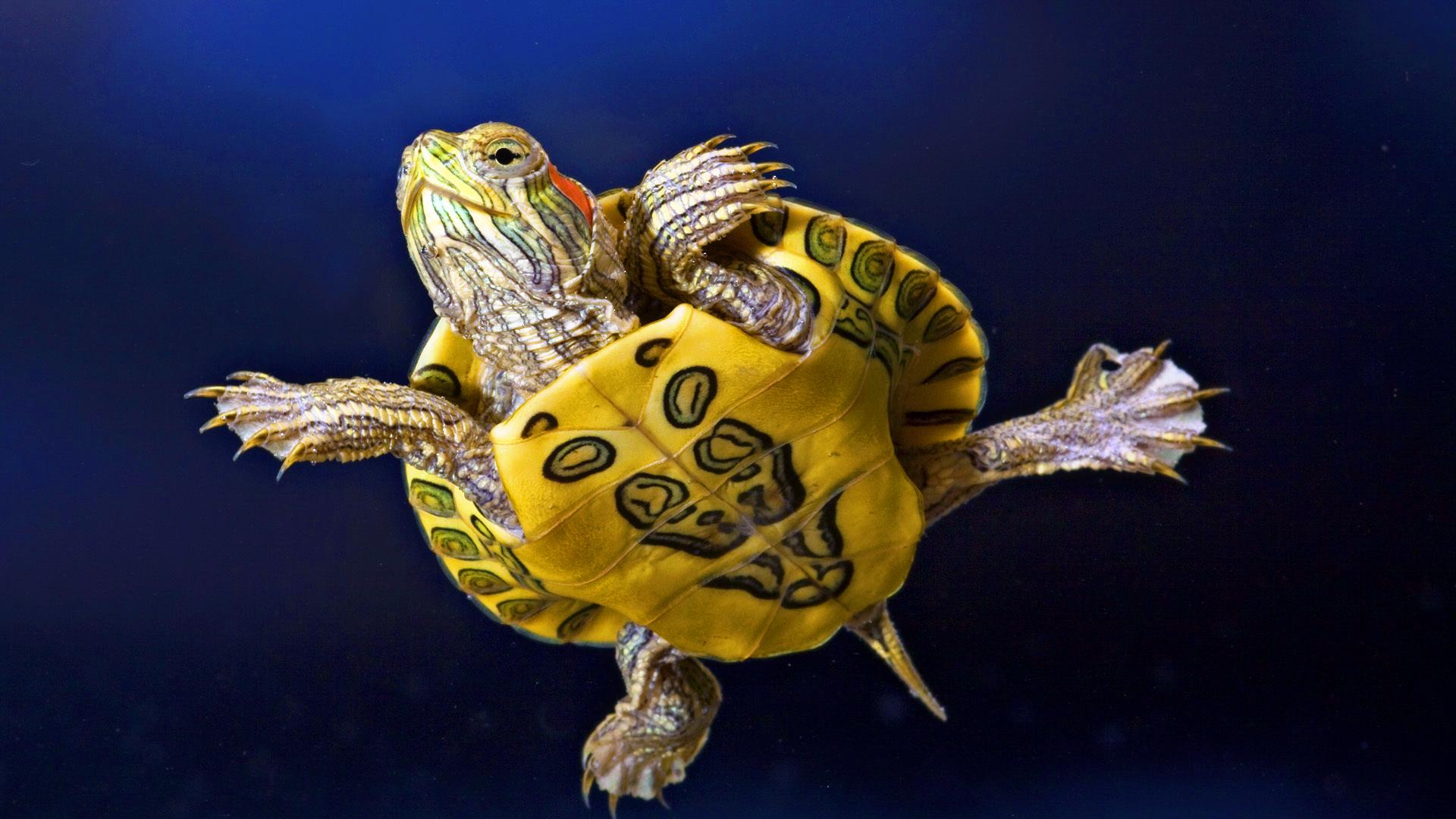 Hình ảnh dễ thương nhất về loài rùa