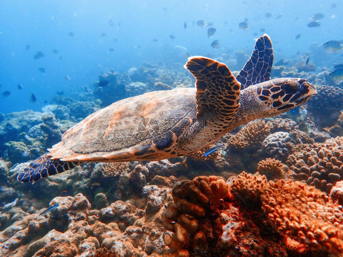 Hình ảnh đẹp về loài rùa biển