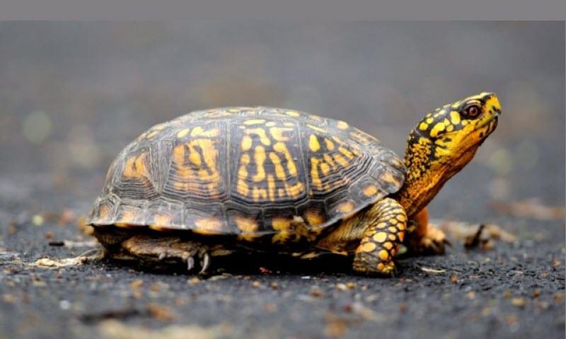 Hình ảnh đẹp về loài rùa nhỏ