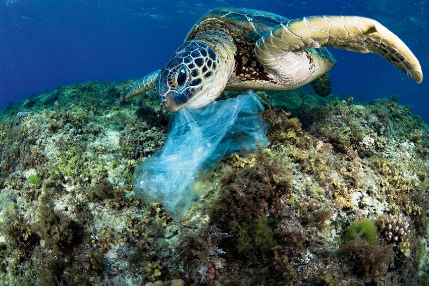 Hình ảnh loài rùa và rác thải túi bóng