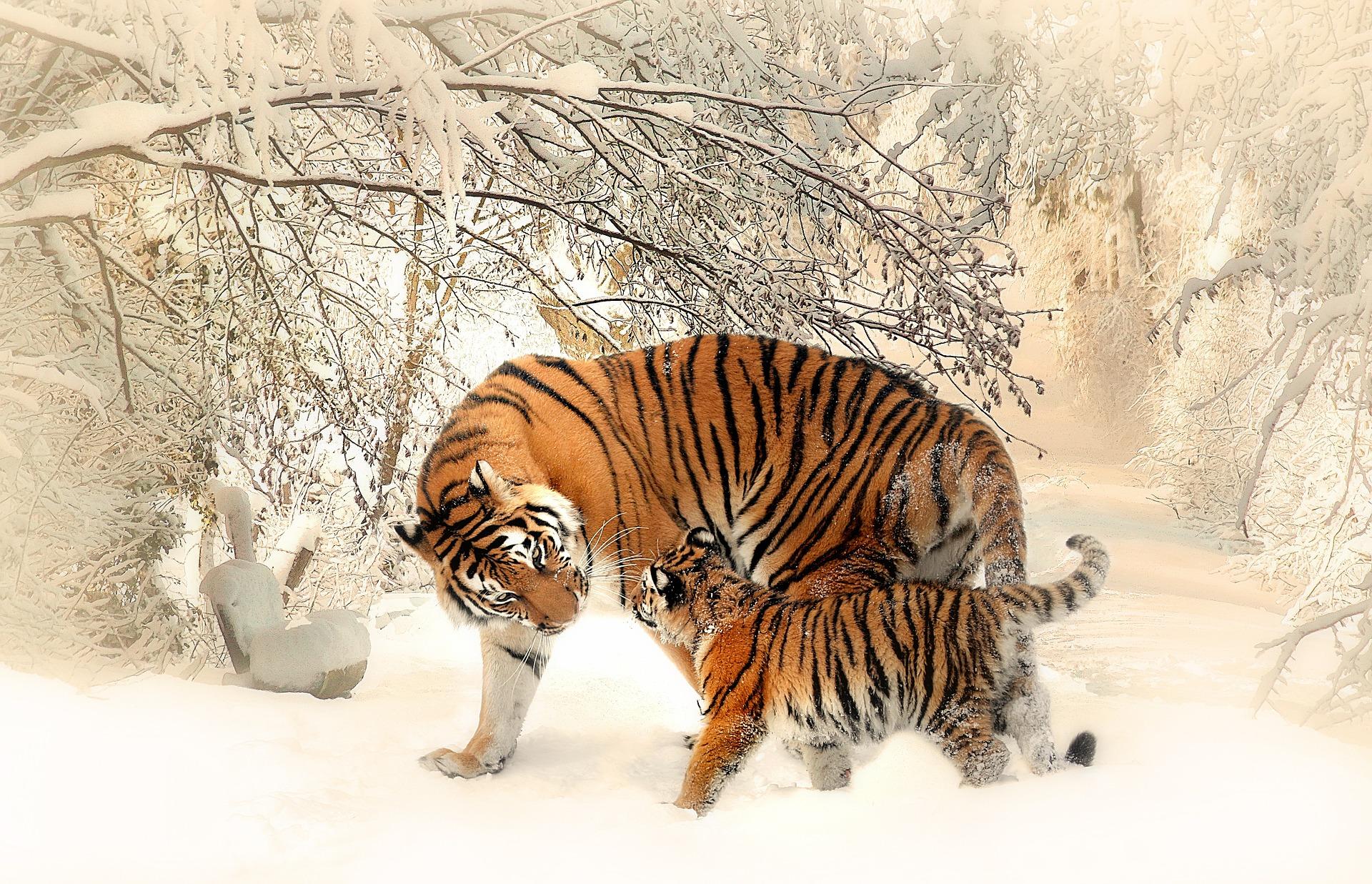 Hình ảnh mẹ con nhà hổ cực dễ thương