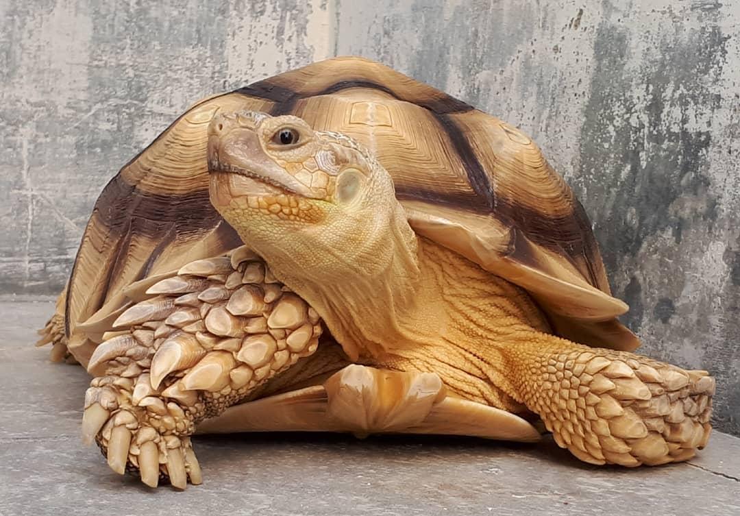 Hình ảnh rùa cảnh ở Việt Nam