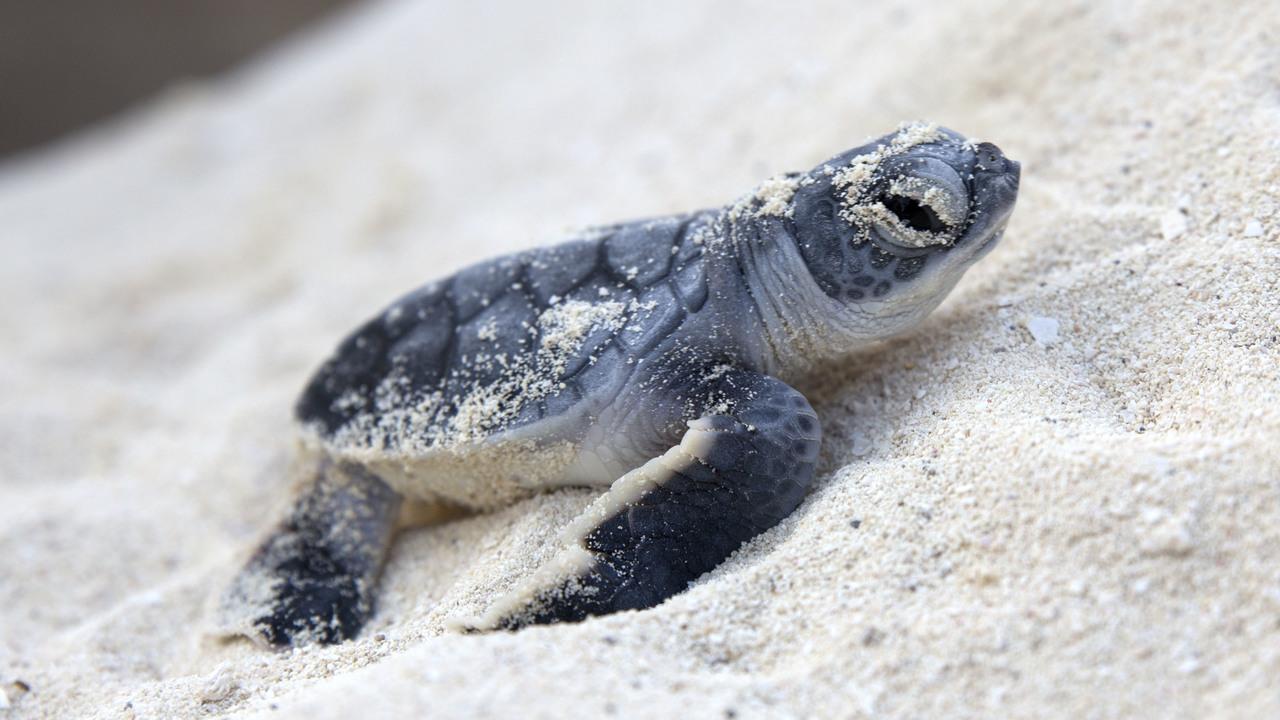 Hình ảnh rùa con ngộ nghĩnh, đáng yêu