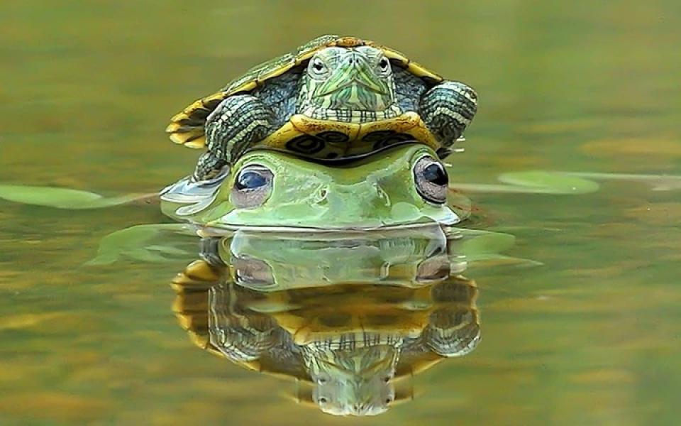 Hình ảnh  tình bạn giữa rùa và cháo chuộc