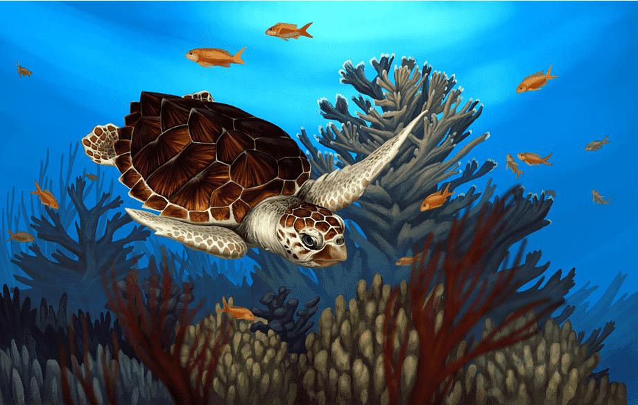 Hình ảnh vẽ con rùa