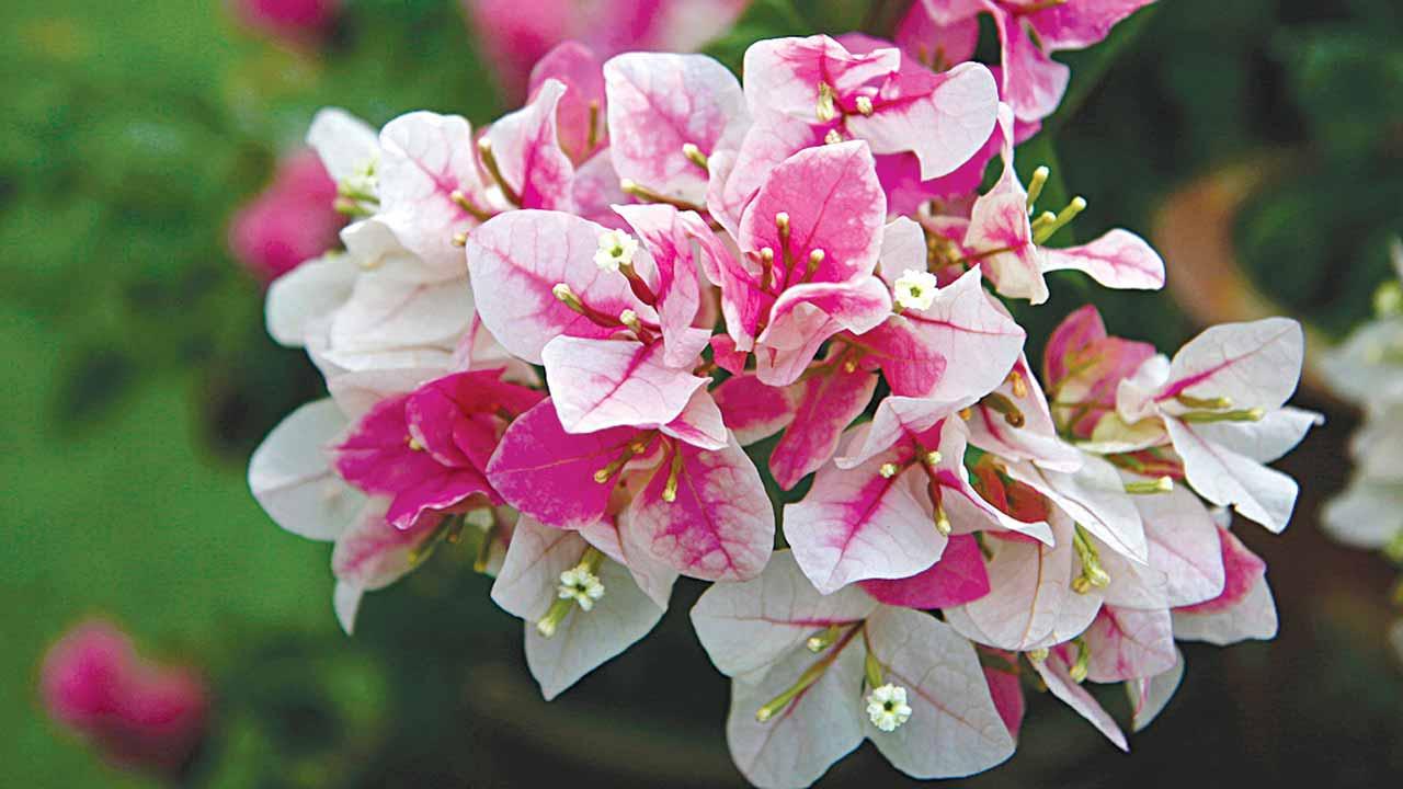 Hình hoa giấy màu độc lạ