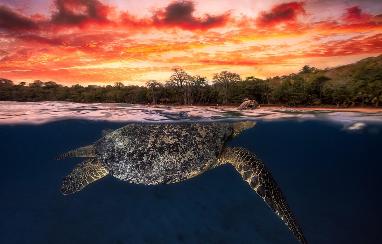 Hình nền con rùa đẹp, độc