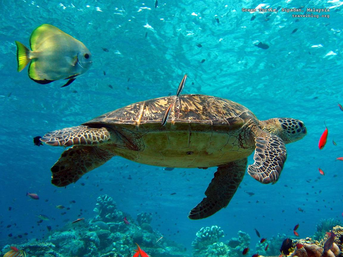 Hình nền con rùa đẹp nhất