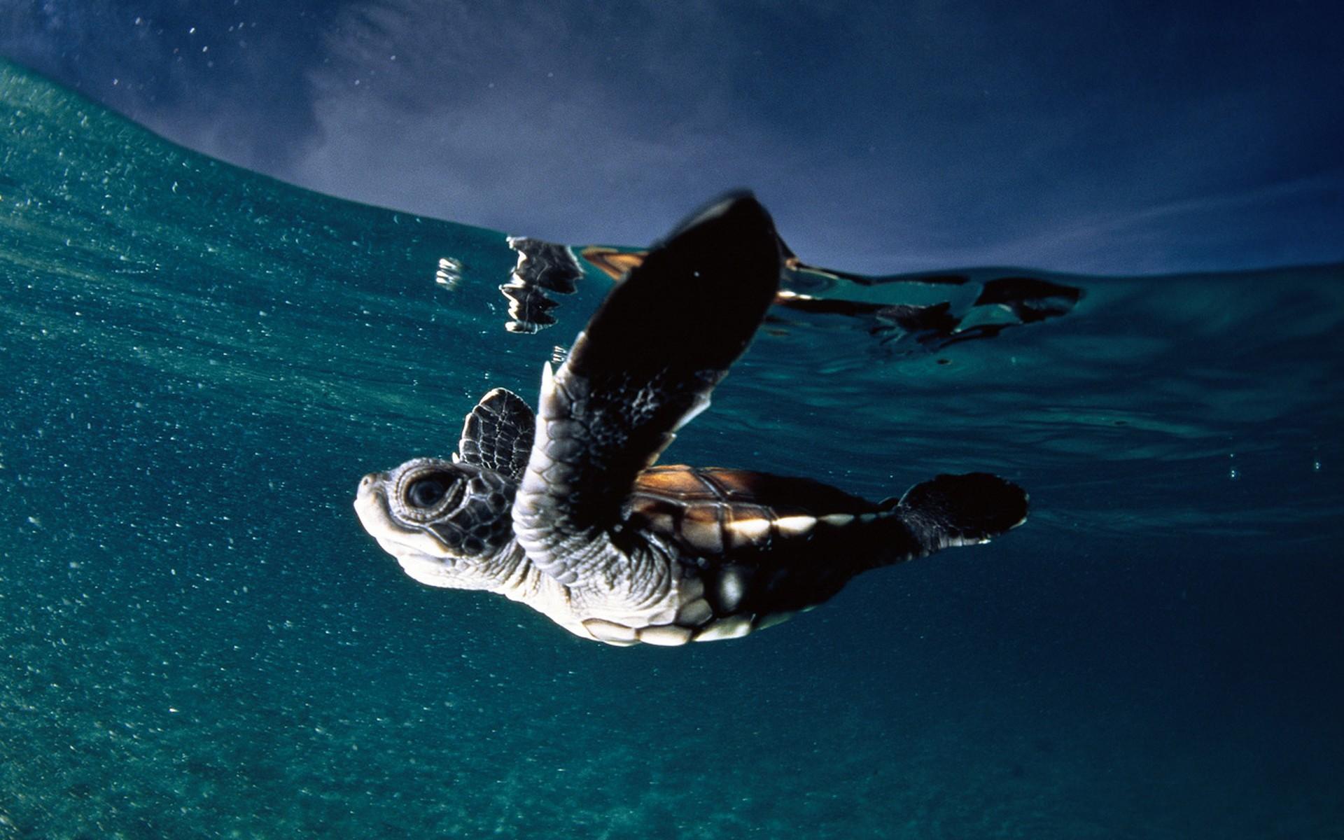 Hình rùa con và đại dương bao la