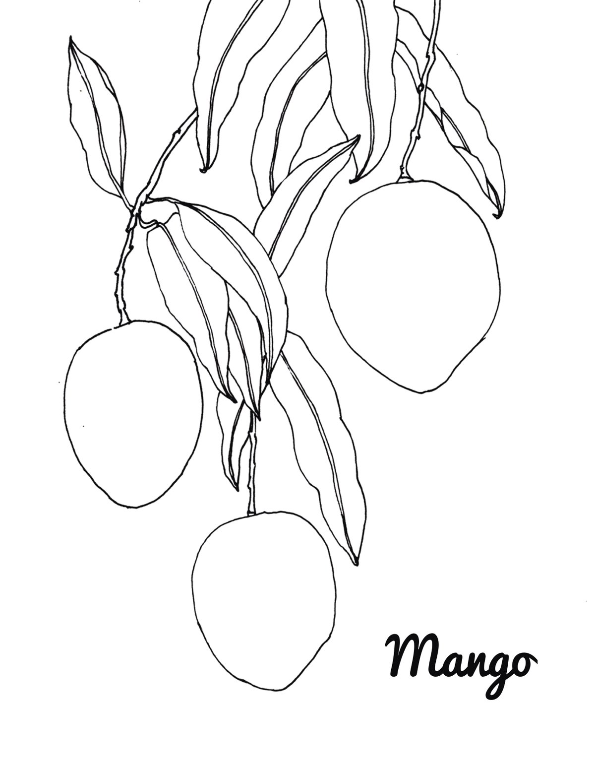 Mango Coloring