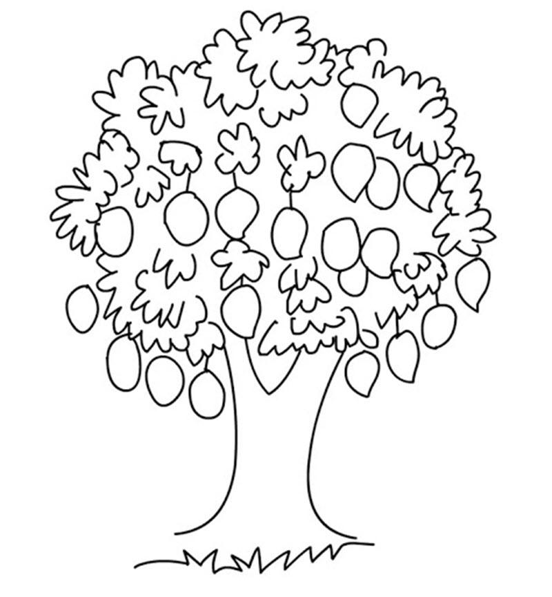 Tranh tô màu cây xoài sai trĩu quả
