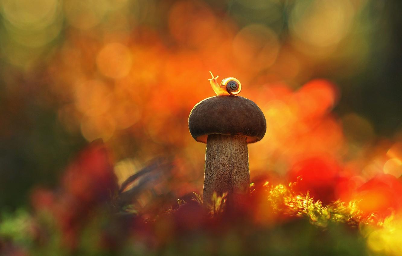 Ảnh cây nấm và chú ốc sên nhỏ