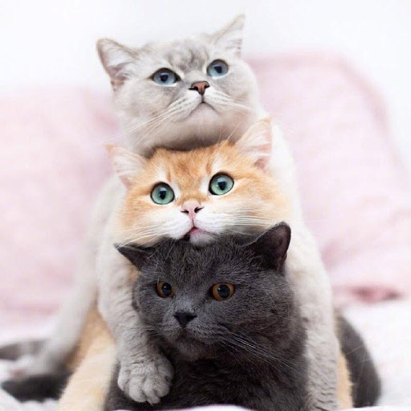 Ảnh đại diện 3 con mèo cực dễ thương