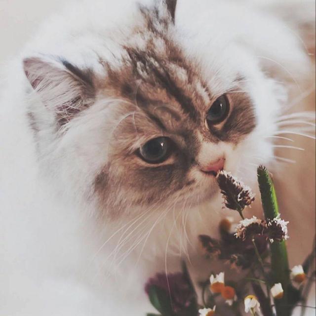 Ảnh đại diện hình con mèo dễ thương nhất