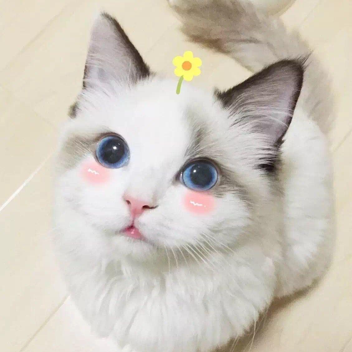 Ảnh đại diện hình mèo dễ thương