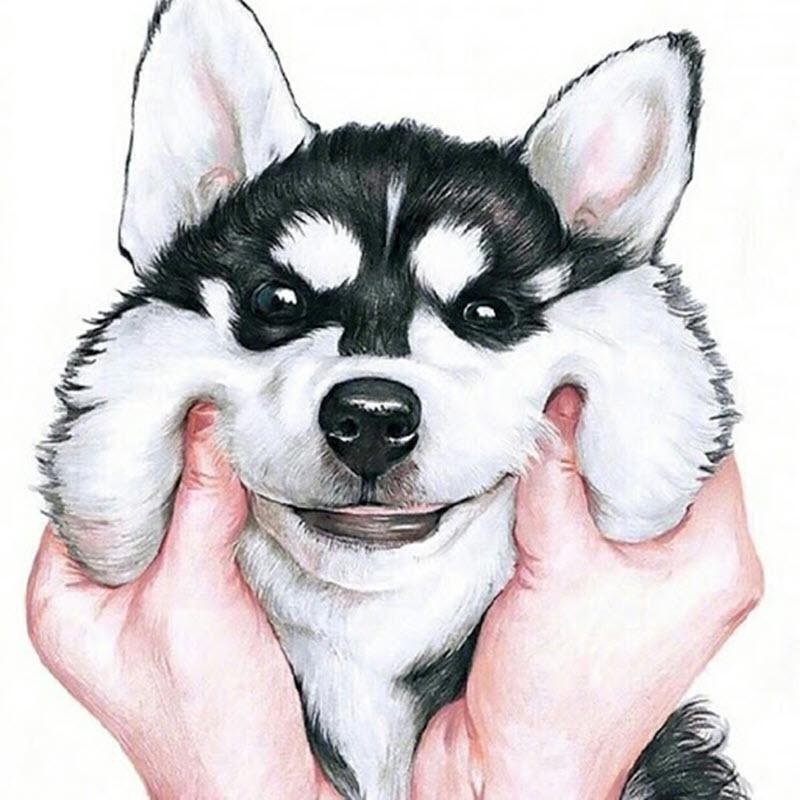 Ảnh đại hiện hình husky đẹp nhất cho zalo