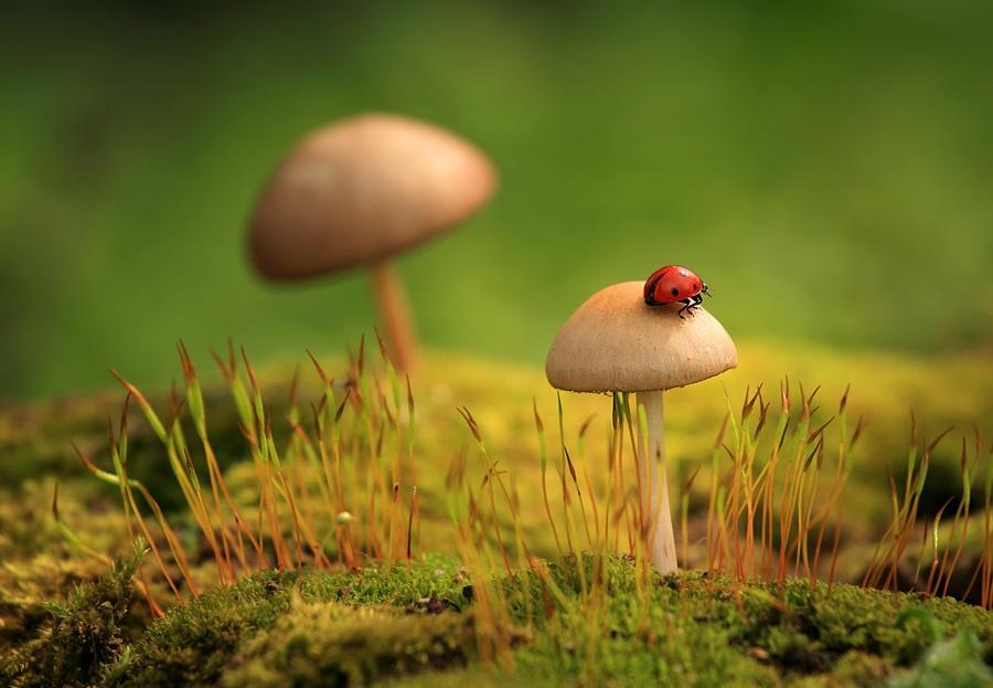 Ảnh đẹp về cây nấm