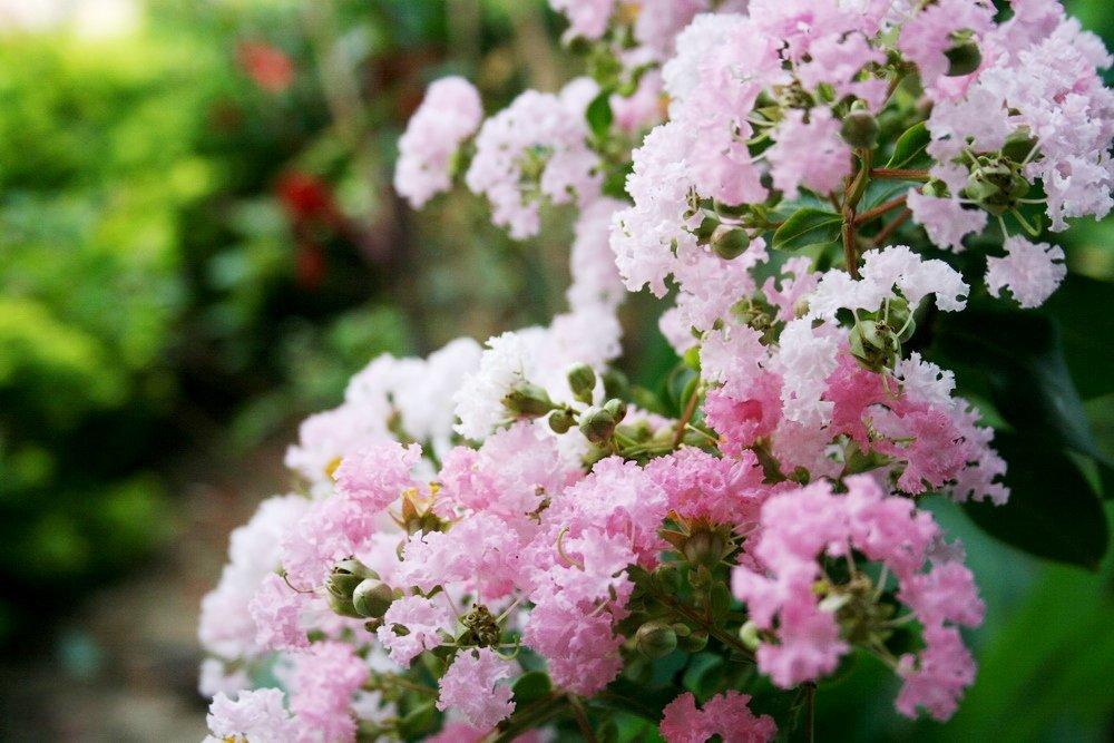Ảnh hoa Tường Vi rực rỡ sắc màu