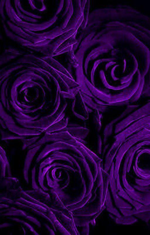 Background hoa hồng tím