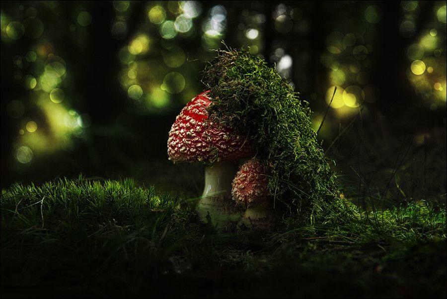 Hình ảnh cây nấm bị che phủ bởi rêu