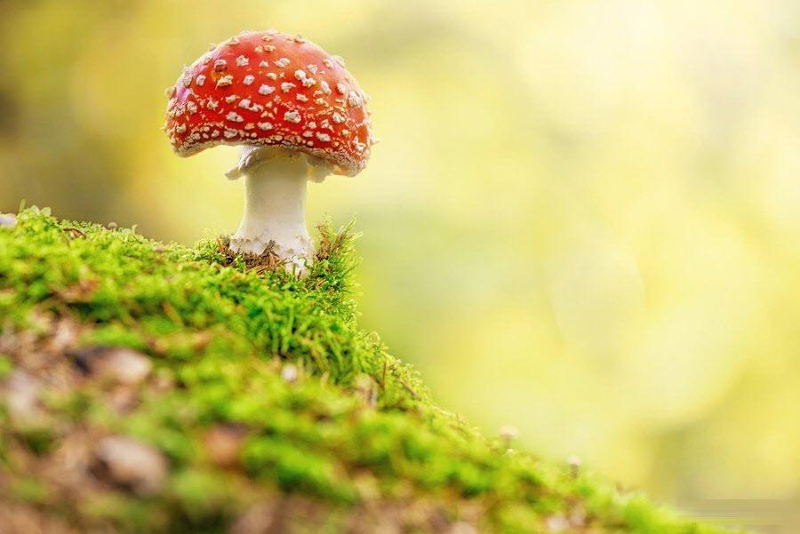 Hình ảnh cây nấm cô độc